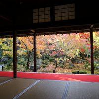京都 紅葉を求めて 圓光寺・詩仙堂や大徳寺など
