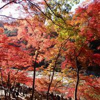 紅葉の香嵐渓・モネの池・なばなの里イルミネーション 名古屋駅から日帰りバスツアーにて