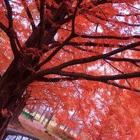 紅葉の美しい杜の都へ〜仙台・聖地巡礼とグルメの旅