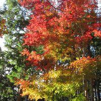 箱根仙石原で紅葉と温泉を満喫