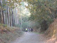 古道巡礼35/36日目 Arzua →Pedrouzo 20.5Km 幻想的な森の中を彷徨う
