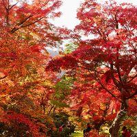 1泊2日で京都の紅葉を見に行く。2日目は源光庵、嵐山周辺