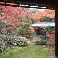 京都西山三山と妙心寺で紅葉をめでる