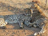 アフリカ旅行記・野生動物と大自然に触れる旅(その2:オコンジマ自然保護区)