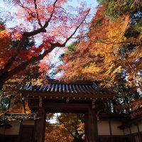 2017年12月1日 京都紅葉だより 京都市内もいいけど長岡京もいいよ�