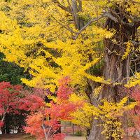 秋色の白水阿弥陀堂といわきの湯