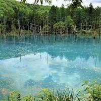 7月の旭岳はツガザクラの宝庫 神秘の青い池