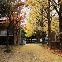 2017年 晩秋 東京大学農学部弥生キャンパス散歩