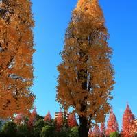 フォトジェニックな名古屋を探す旅