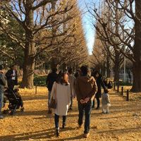 神宮外苑を散策。銀杏並木はほぼ散ってしまってました〜。
