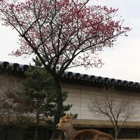2017年 関西食い倒れ?オフ会とUSJの旅【5】ガブちゃんと巡る初めての奈良☆お寺巡りと美味しい物たち〜御朱印デビューしました〜