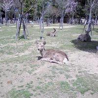 人生の旅(18きっぷ編)「奈良・京都・彦根城」2007年4月4日