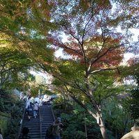秋の鎌倉 #3 : 北鎌倉、建長寺と鶴岡八幡宮、長谷寺、鎌倉大仏
