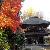 東京の紅葉 広徳寺 2017年の秋