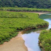 奄美大島�マングローブ原生林でカヌー体験・あやまる岬・奄美パーク