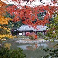 2017年 加茂から奈良を歩く