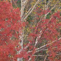 十勝岳温泉から秋の美瑛、富良野