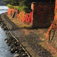 2017年秋|新潟・山形の凸凹旅【7】-- 朝陽に映える紅葉のケヤキ並木と石畳に彩られた「山居倉庫」--
