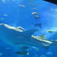 初めての沖縄はクリスマスに(2) 〜2日目 美ら海水族館・古宇利島〜