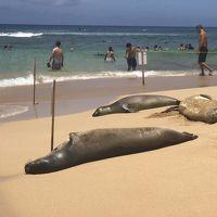 ハワイの楽園カウアイ島旅行記(2)