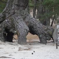 2017年(平成29年)12月淡路島(西淡町の潮崎温泉「あわじ浜離宮」宿泊)神戸を散策し、40年ぶりの奈良訪問�