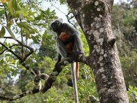 ボルネオの自然を求めてインスタ映えするニャンコの町・クチンへ(2)〜バコ国立公園
