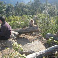 安芸の宮島の弥山に登る(2008年4月4日)