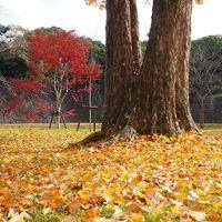 久しぶりの秋季皇居乾通り一般公開2017年、、ピークは過ぎてましたが綺麗でした