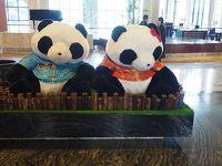 パンダ!PANDA!熊猫! 成都ひとり旅 2