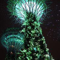 雨季のシンガポール探鳥 その7 ガーデンズ・バイ・ザ・ベイ