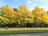 ビクトリアの紅葉と冬枯れのバンクーバー