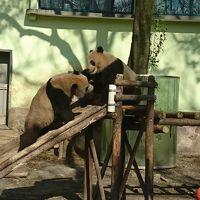 上海で動物園とディズニー