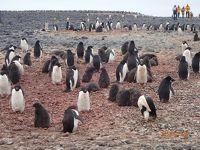 冗談から始まった南極上陸付きクルーズ旅行・ダイヤモンド・オーシャン号 NO.10 第6日目