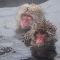 大人の休日倶楽部パス� 〜スノーモンキーを見に地獄谷温泉へ〜
