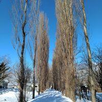 雪景色の美しい北大キャンパスを歩く