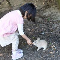 ウサギだらけの島に行ってきました (広島県大久野島&尾道) Part1