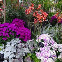 真冬の華麗な花々を愛で、三大稲荷のひとつを訪れましたーーー