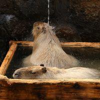 滝と動物の癒し旅 動物編