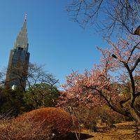 新宿御苑の春花