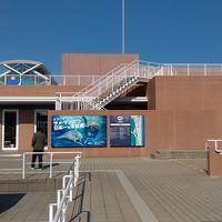 初めての大洗水族館!サメとマンボウ、そして、エトピリカ