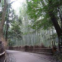 京都の世界遺産巡り 二条城 天龍寺 苔寺