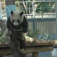 シャンシャンを見に上野動物園へ