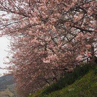 2018年 河津桜まつり