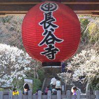 うめの季節の鎌倉歩き