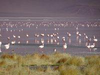 南米周遊:チリのアタカマ砂漠に行ってきました。