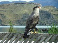 南米周遊:チリのパイネ国立公園に行ってきました。
