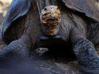 地球上に残された動物たちの最後の楽園 ガラパゴスを日帰りツアーで巡る (Galapagos, Last paradise remain on earth)