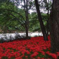 秋のお花見
