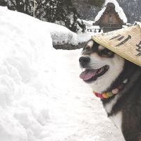 気が付くと、白川郷。なぜか、富山まで。