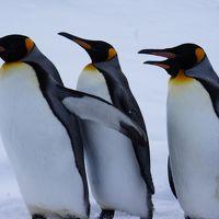 冬季限定☆旭山動物園のペンギン散歩の後は、フラノ寶亭留でもぐもぐタイム